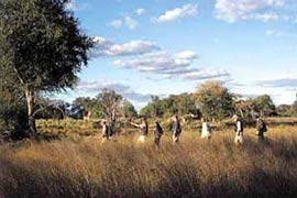 A guided walking safari