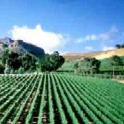 Vineyards of the Western Cape