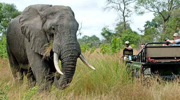 Observing and elephant on a game drive